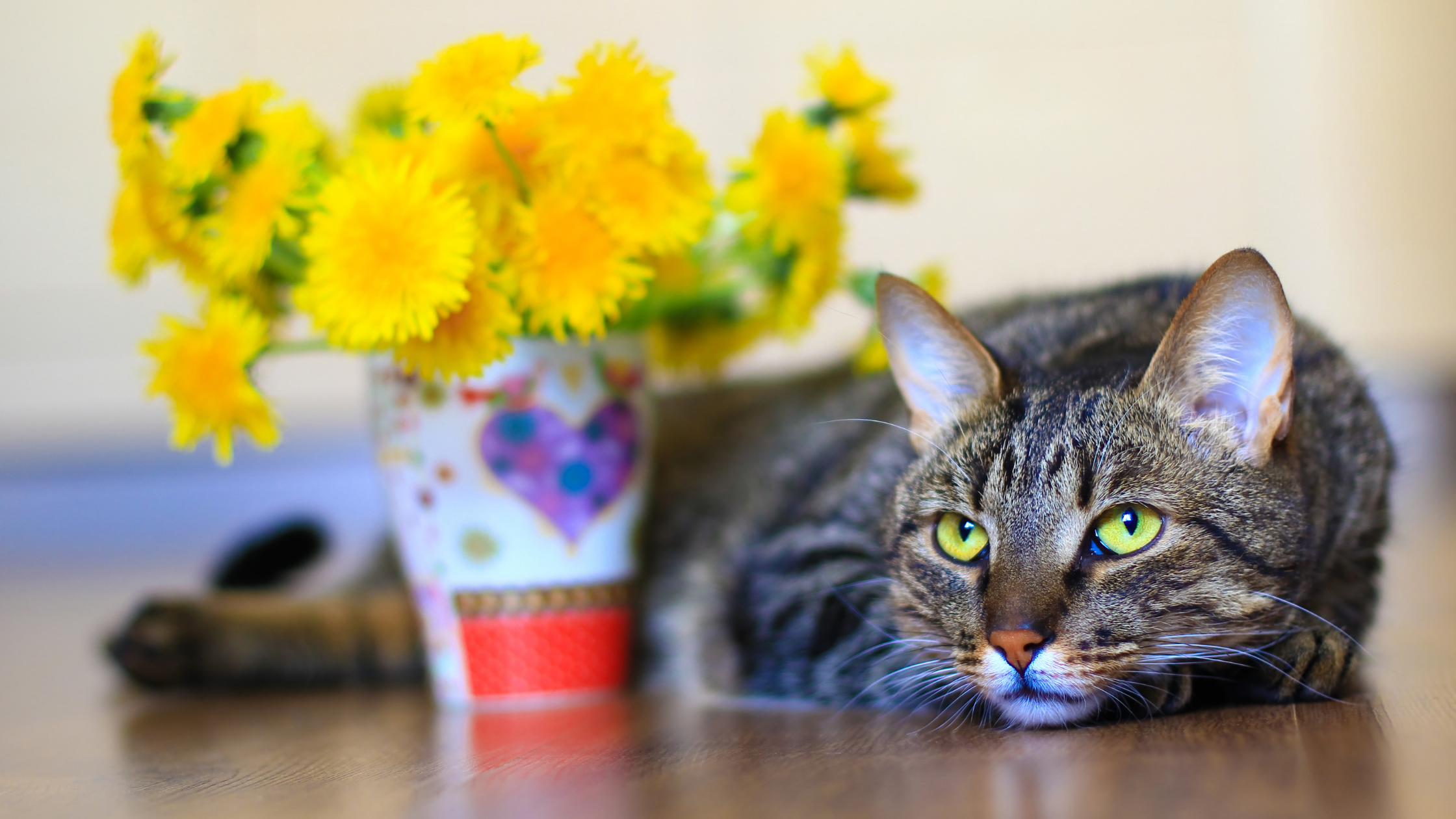 what flowers are toxic to cats